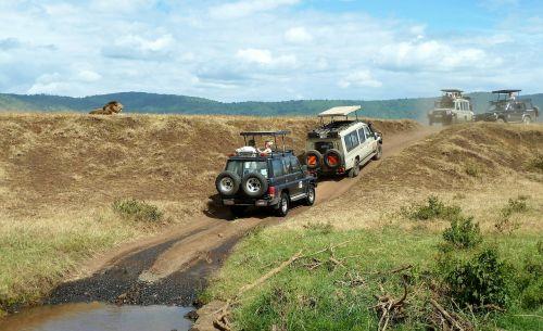 safari wildlife watching jeep