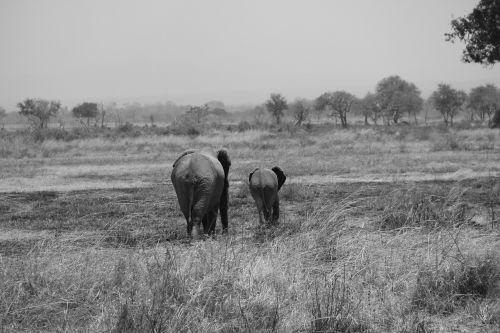 safari africa tanzania
