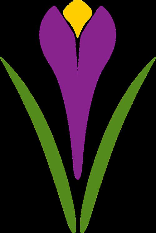 saffron flower plant