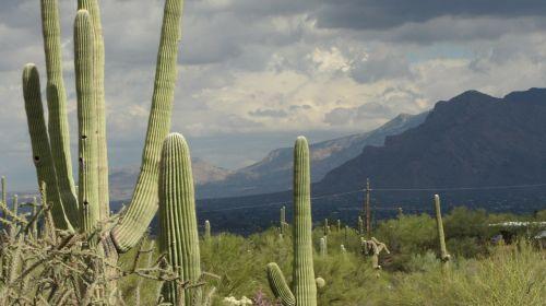 saguaro arizona landscape