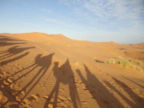 sahara desert sand shadow