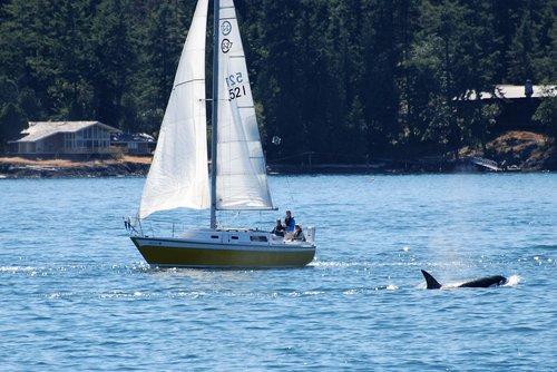 sailing boat  encounter  nature observation