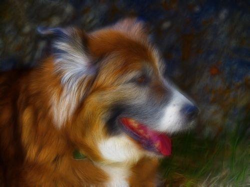 saint bernard dog canine