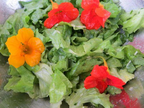 salad nasturtium flowers
