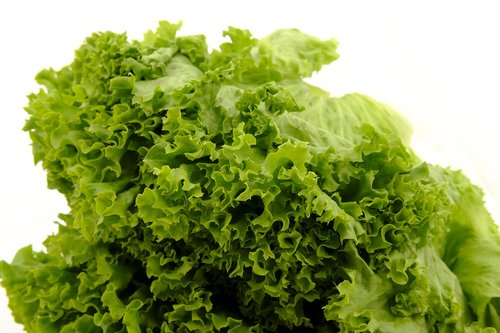 salad  leaf lettuce  lettuce