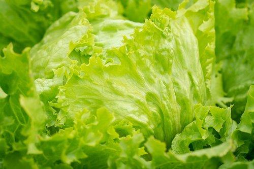 salad  iceberg lettuce  green