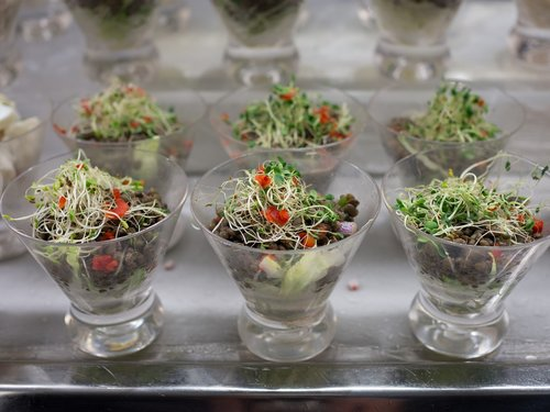 salad  sprouts  healthy