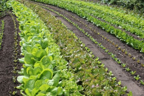 salad rows discount