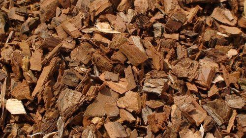 salix alba white willow dried
