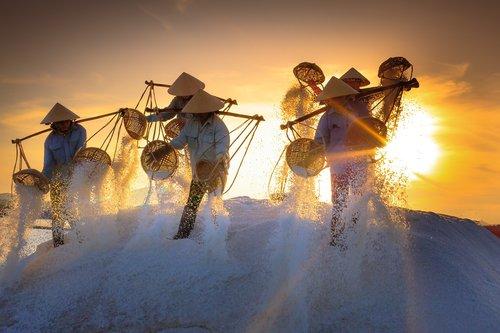 salt  field  province