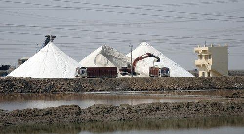 salt  production  harvesting