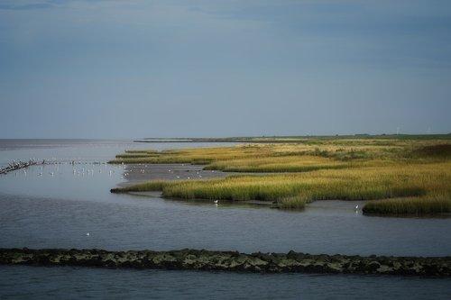 salt marshes  north sea  watts