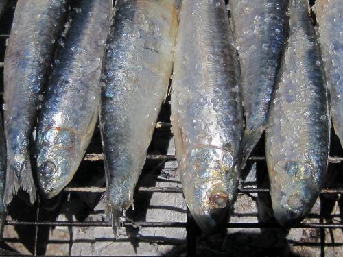 Salted Sardines On The Grid