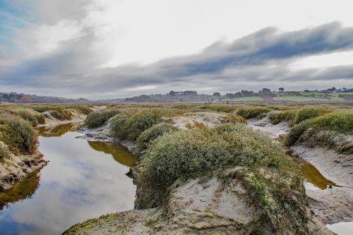saltmarsh estuary coastal