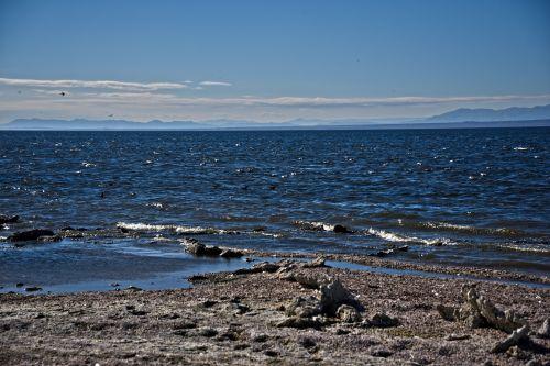 Salton Sea Beach Landscape