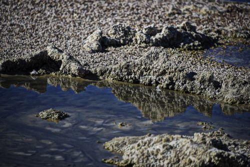 Salton Sea Shore Reflection
