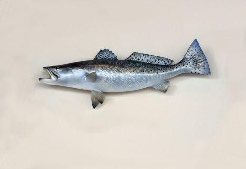 Saltwater Trout