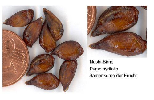 Nashi Pear Seeds