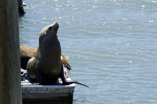 san francisco bay  marine life  nature