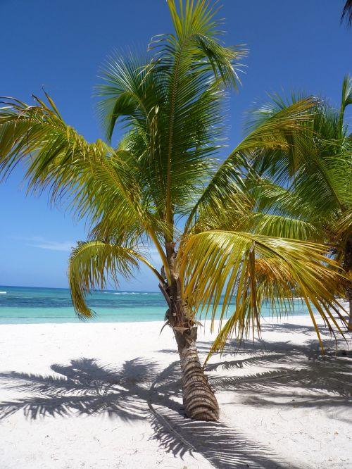 sand caribbean coconut