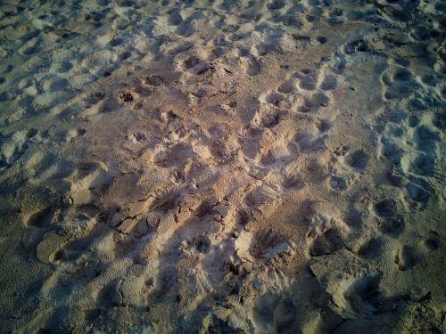 sand beach treads