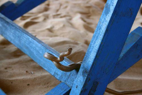 sand snake nature