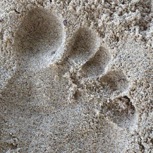 sand footprint in the sand beach