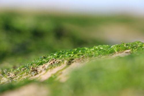 sand algae seaside