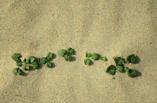 sand life nature