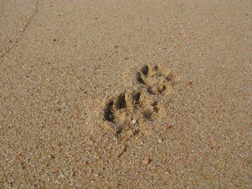 sand beach reprint