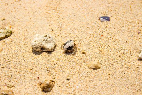 sand beach crab