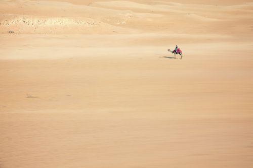 sand camel desert