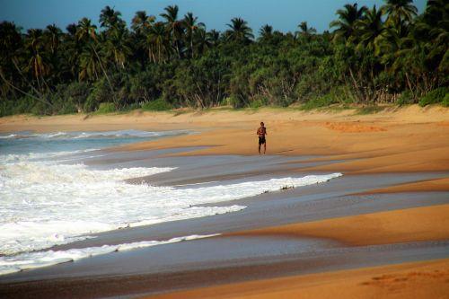 sand jogger palm trees