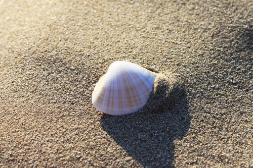 sand beach seashore