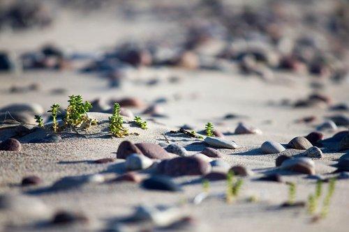 sand  nature  beach