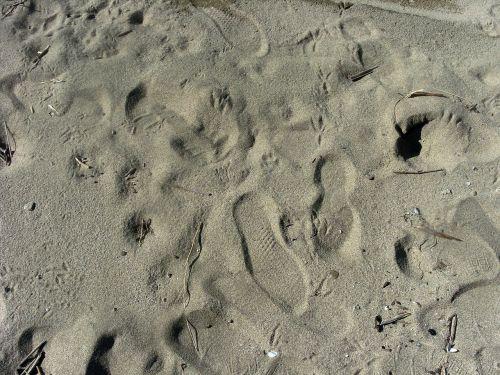 sand footprint trace