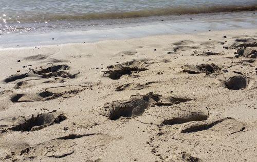 sand beach traces