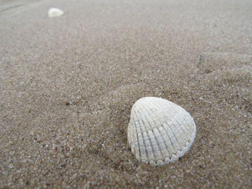 sand shell sea