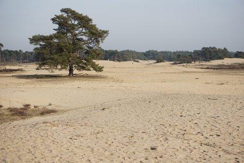 sand drifts  tree  den