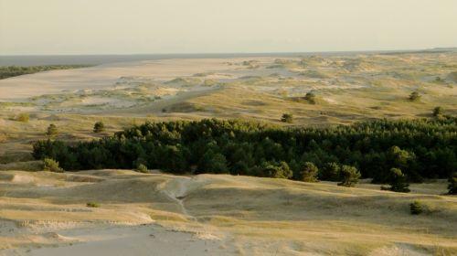 smėlis & nbsp, kopos, jūra, smėlis, lietuviu, medžiai, pušys, geltona, žalias, miškas, smėlio kopos jūros smėlis