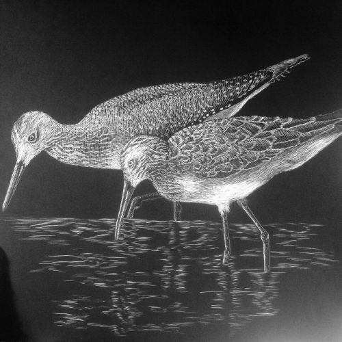 sandpiper marine birds beach birds