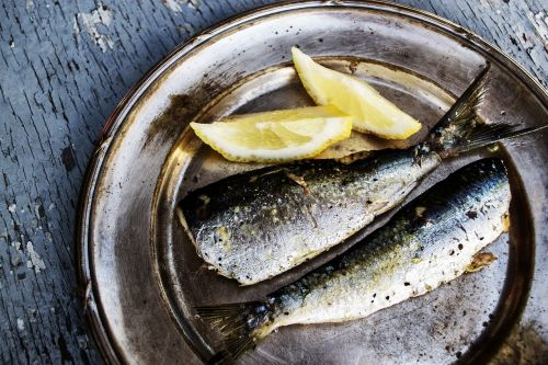 sardines fish pictures fish