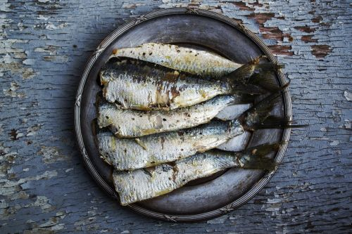 sardines fish plated food