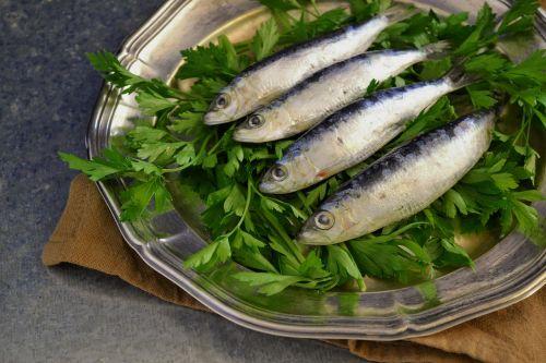 sardines fresh fish fish