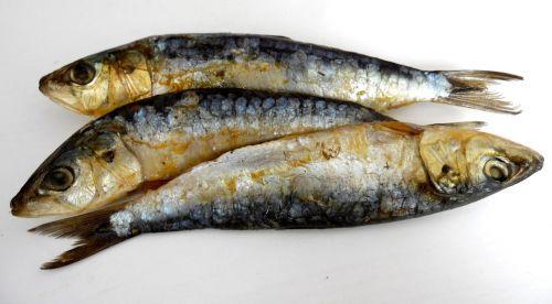 sardines smoked food
