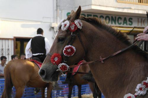 sardinia horse rider