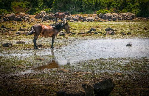 sardinia the national park horse
