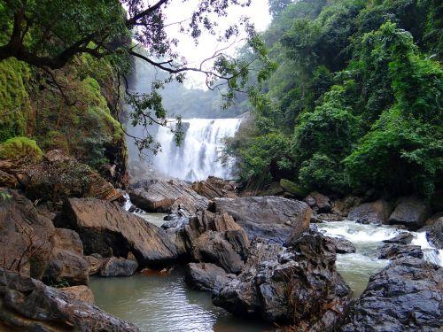 sathodi falls water fall forest