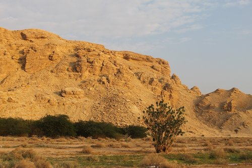 saudi arabian desert  desert  desert plants