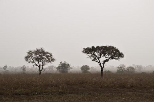 savannah  nature  landscape